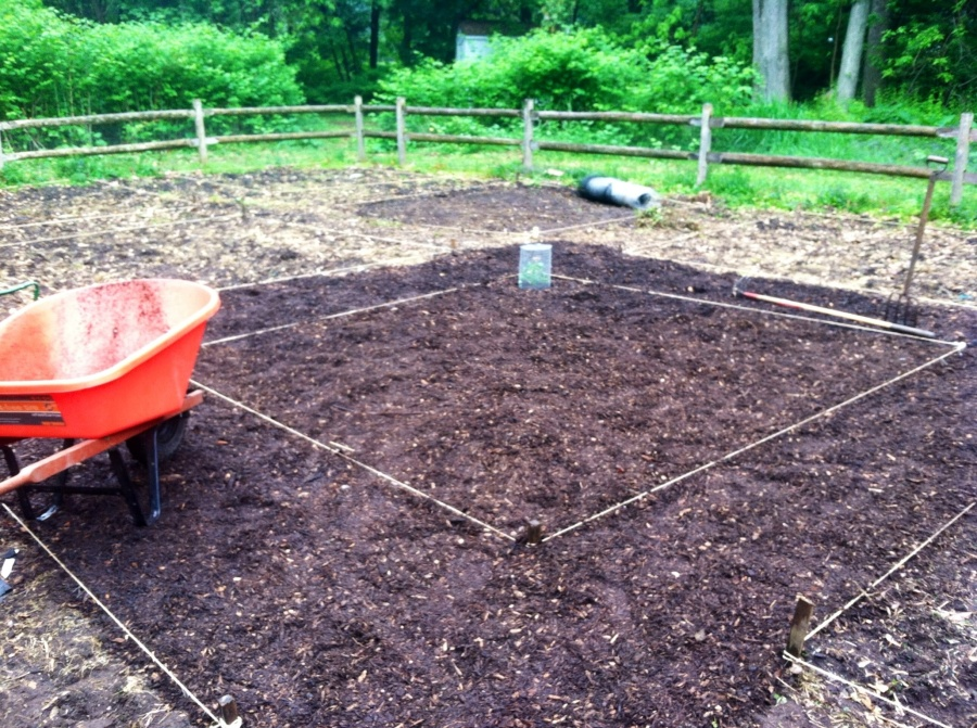 Plot mulched